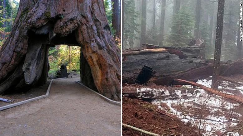 170109120812-pioneer-cabin-sequoia-fallen-split-exlarge-169.jpg